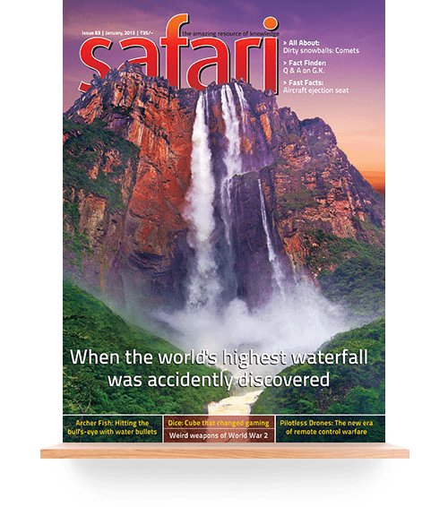 Safari Magazine - English Edition